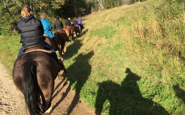 Image showing a trail of riders on horses heading down a path in the woods.