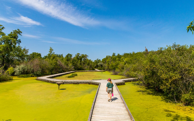 Image showing a young girl walking on a wooden boardwalk in a over a overgrown pond.