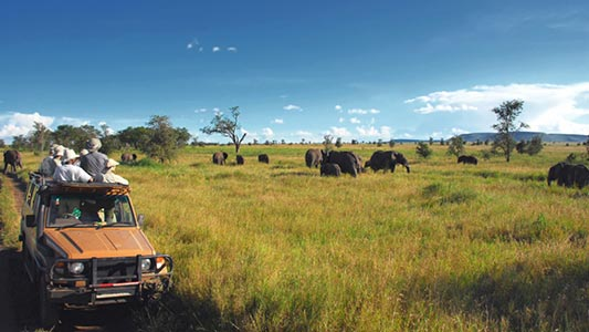 A jeep driving by a field with elephants.